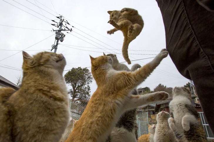 Kot skaczący po jedzenie oferowane przez turystów