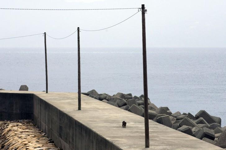 Samotny kot spacerujący wzdłuż portowego wybrzeża