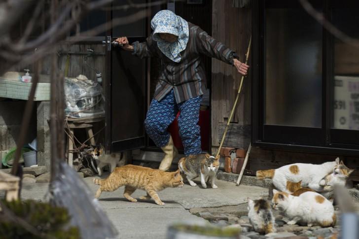 Mieszkanka wyspy przeganiająca stada kotów sprzed domu