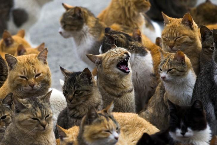 Koci tłum w porcie na wyspie Aoshima (prefektura Ehime) w południowej Japonii