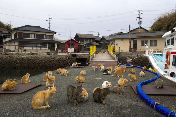 Zgromadzenie kotów na nadbrzeżu