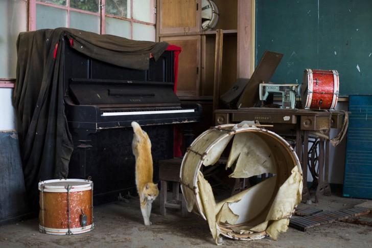 Kot zeskakujący z pianina w opuszczonej szkole