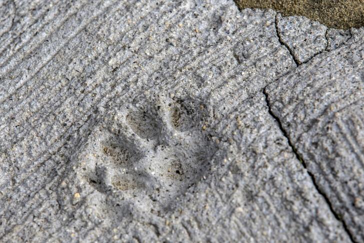 Ślad kociej łapy odbity na betonie