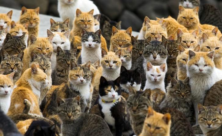 Zwierzęta w porcie Aoshima