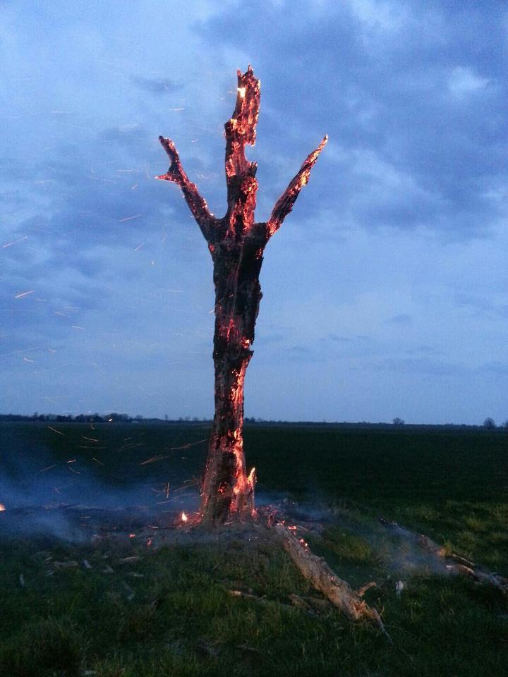 treethunder
