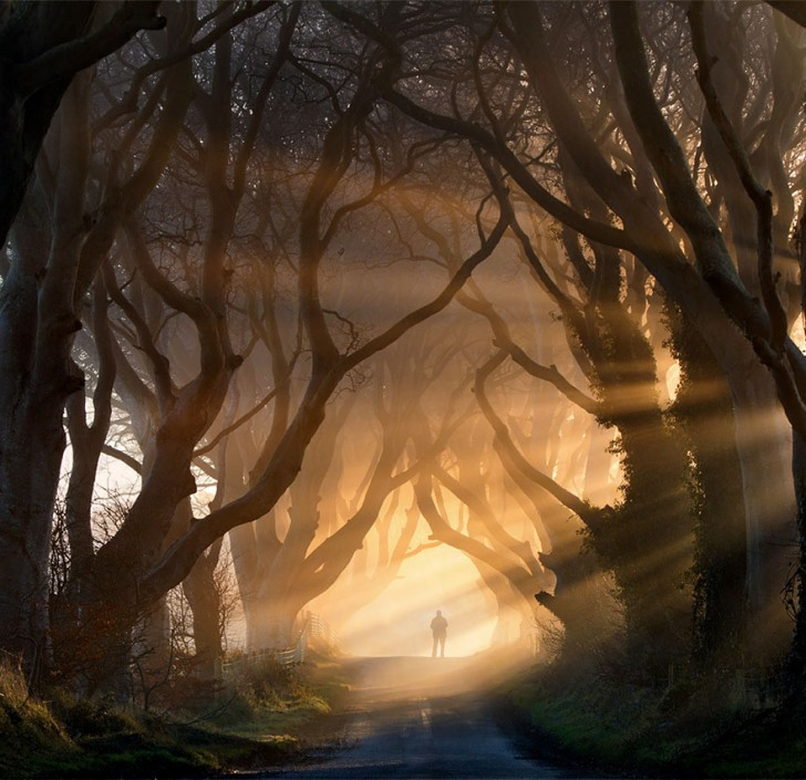 19 - The Dark Hedges In Northern Ireland