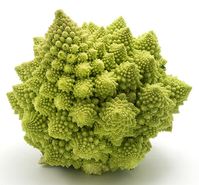 Romanesco broccoli (or Roman Cauliflower) on a white background