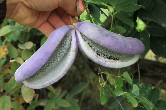 20-of-the-Worlds-Weirdest-Natural-Foods-Fruits-Vegetables2__700