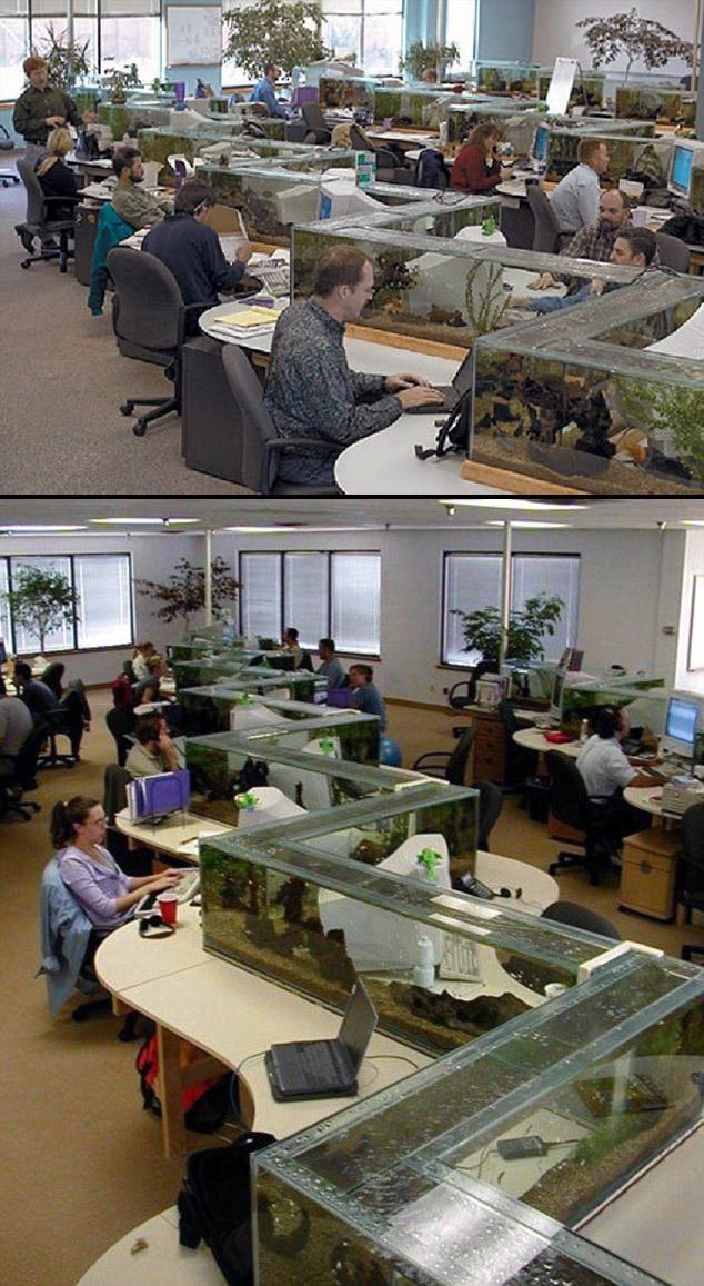 Biurka z akwariami w firmie Freshwater Software (która zamknęła swoje podwoje w 2008 r.)