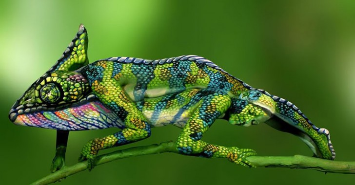 camochameleon