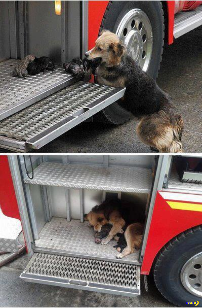 firetruckpuppies