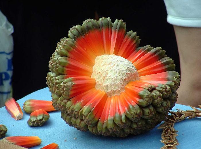 Najdziwniejsze warzywa i owoce z całego świata