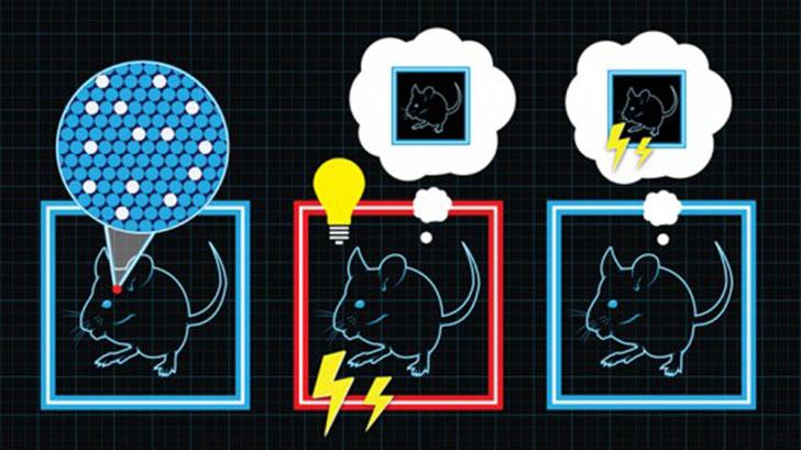 mit-riken-memory-manipulation-in-mice-0
