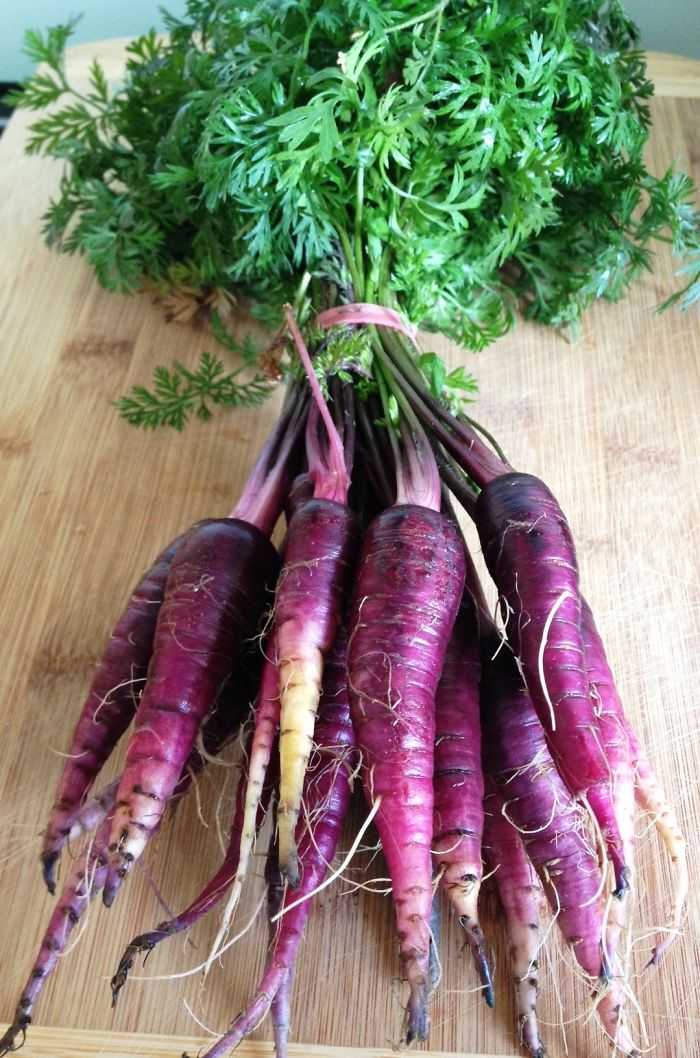 purple-carrots-e1340450049865__700