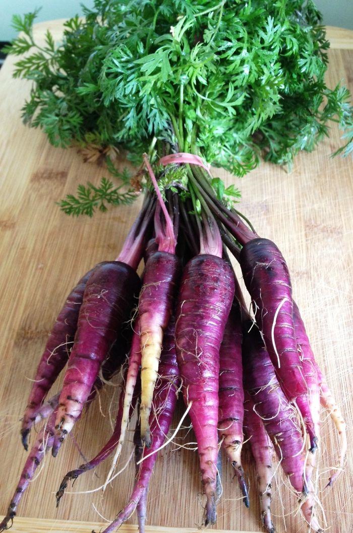 purple-carrots-e1340450049865__700