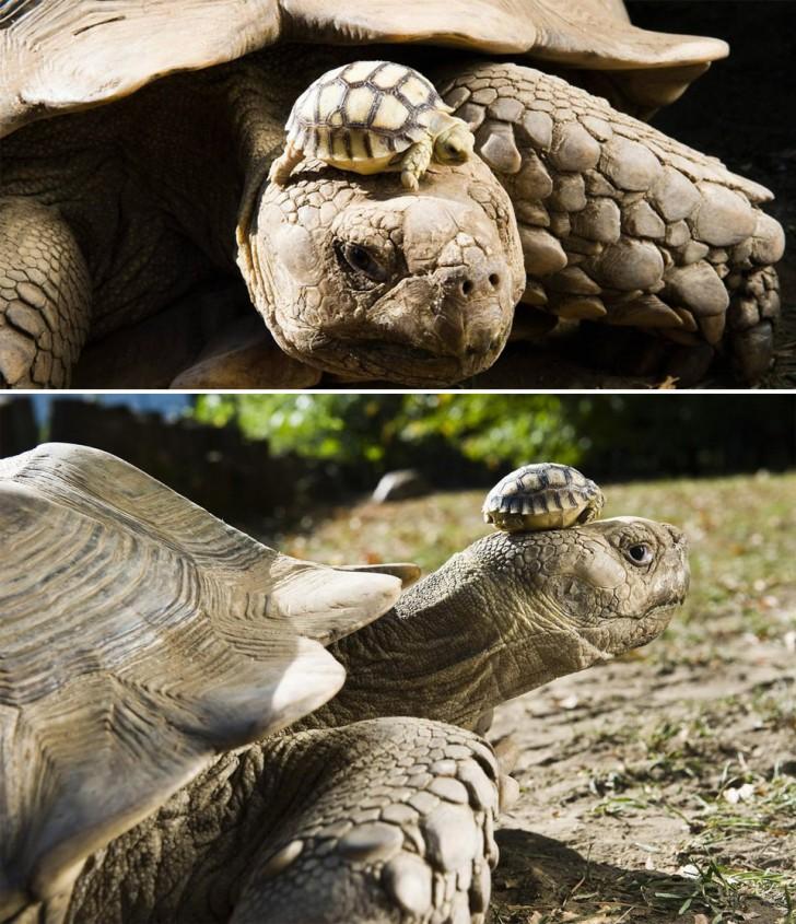 turtlemom