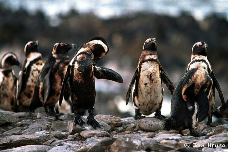 You Will Want To Recycle Everything After Seeing These Photos! - Oiled Penguins