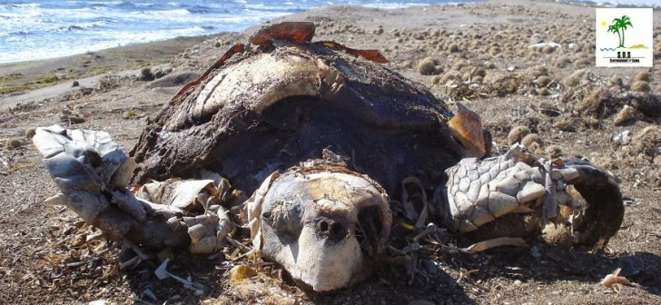 You Will Want To Recycle Everything After Seeing These Photos! - Turtle Population Killed By Chemicals In Environment (Tunisia)