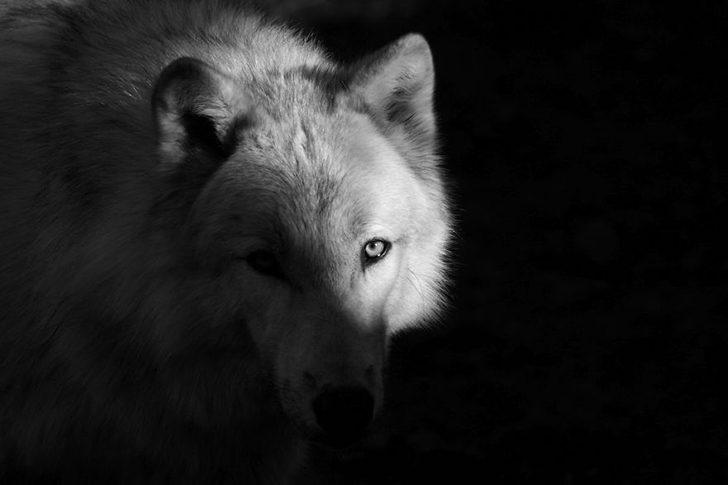 animal-portraits-zoo-photography-boza-ivanovic-11