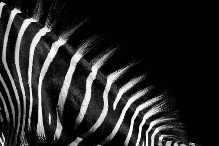 animal-portraits-zoo-photography-boza-ivanovic-13