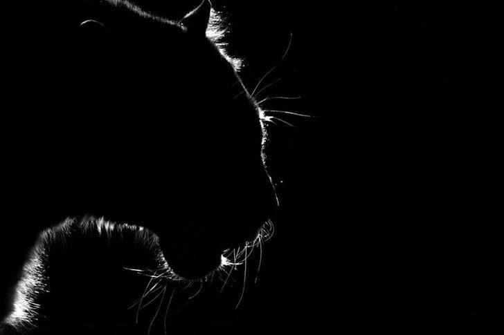 animal-portraits-zoo-photography-boza-ivanovic-14