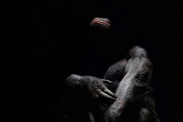 animal-portraits-zoo-photography-boza-ivanovic-16