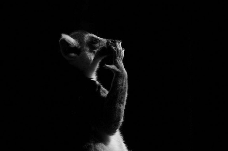 animal-portraits-zoo-photography-boza-ivanovic-18