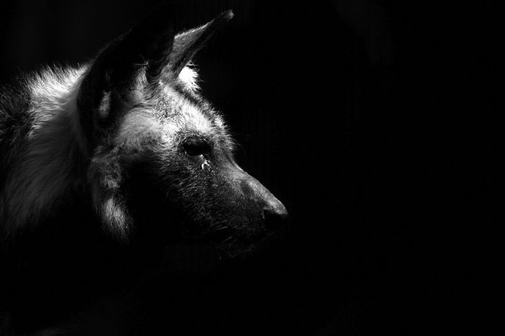 animal-portraits-zoo-photography-boza-ivanovic-3