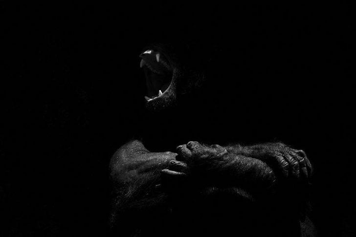 animal-portraits-zoo-photography-boza-ivanovic-6