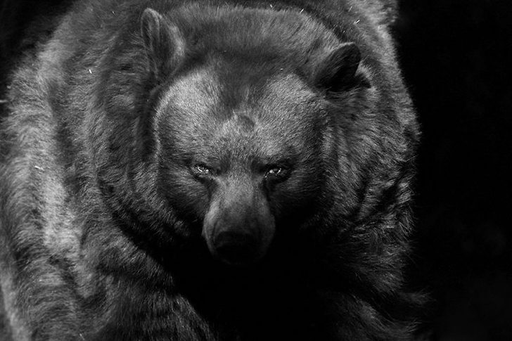 animal-portraits-zoo-photography-boza-ivanovic-8