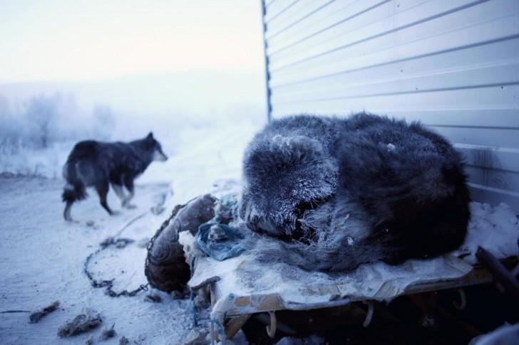 coldest-city-sleeping-dog