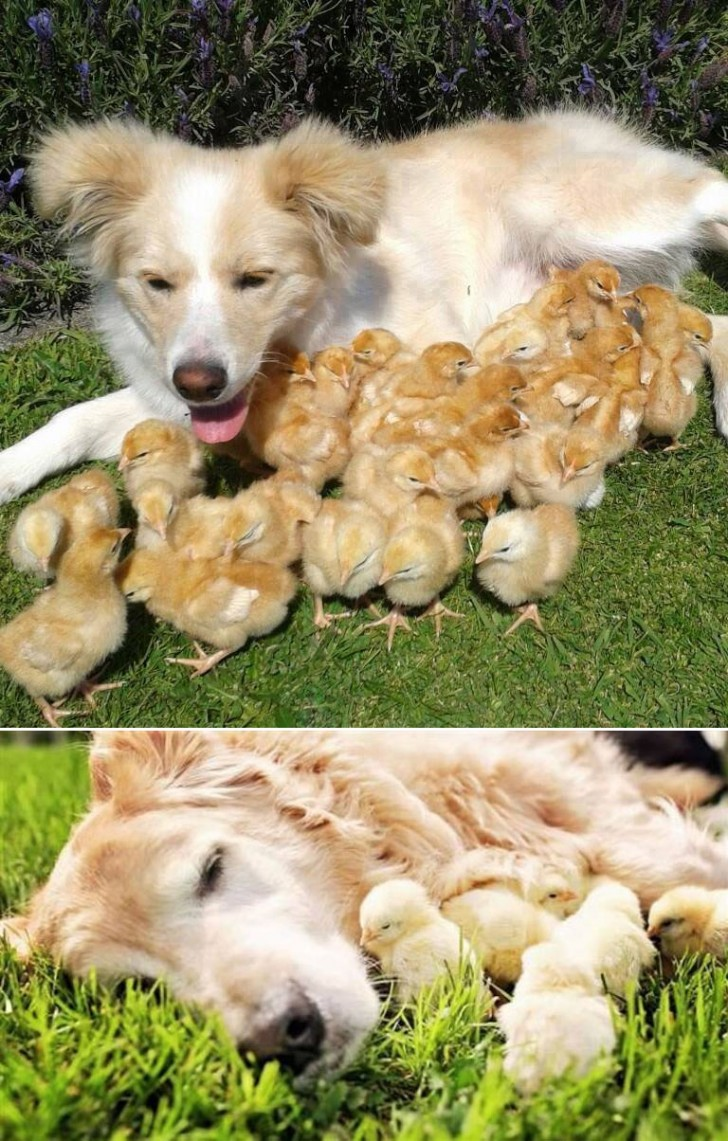dogchicks