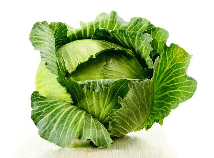 krautlook.com-Sauerkraut-Cabbage