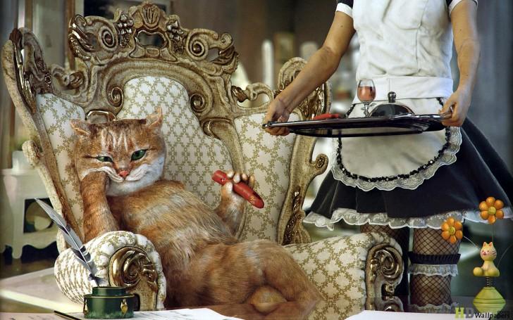 spoiled-cat-1