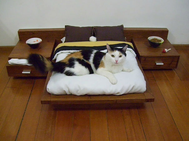 spoiled-cats-4__605