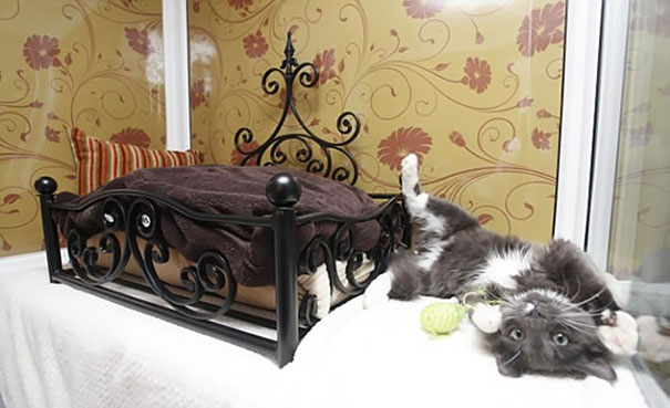 spoiled-cats-7__605