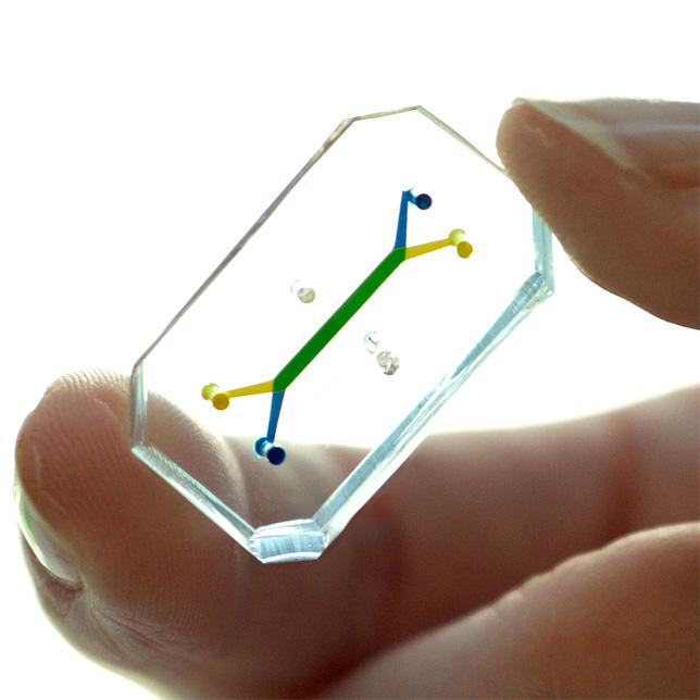 Human-Organs-on-Chips-Wyss-Institutue-Harvard-University_dezeen_01_644