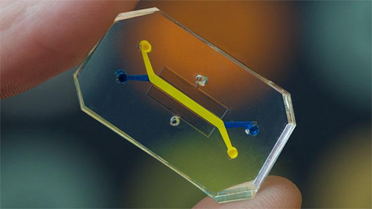 Human-Organs-on-Chips-Wyss-Institutue-Harvard-University_dezeen_02_644