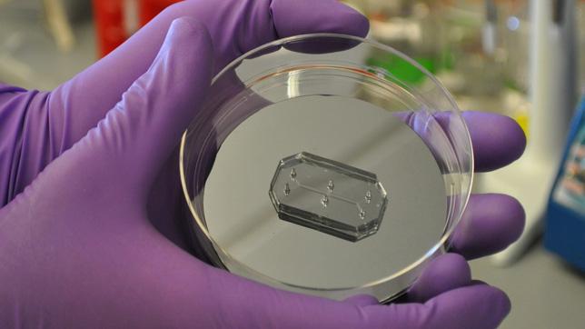 Human-Organs-on-Chips-Wyss-Institutue-Harvard-University_dezeen_05_644