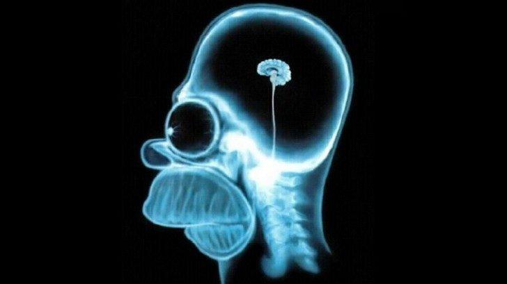 homer-brain-1060x595