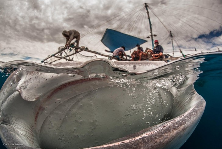 this-photo-of-a-whale-shark-from-indonesia-titled-big-mouth-by-adriana-basques-was-one-of-the-top-photos-from-the-bbc-photographer-of-the-year-competition