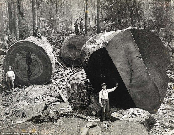 historical-photos-pt3-california-lumberjacks2