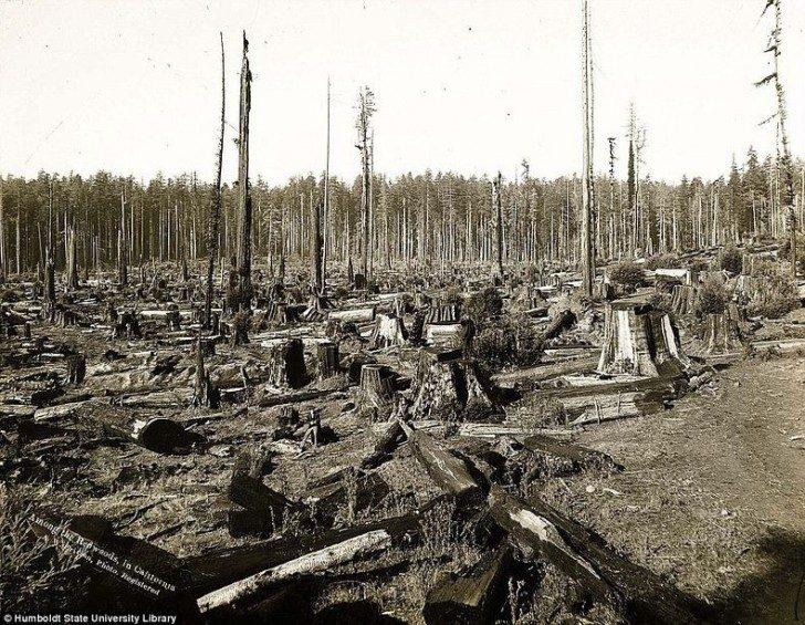 lumberjacks-redwood-02