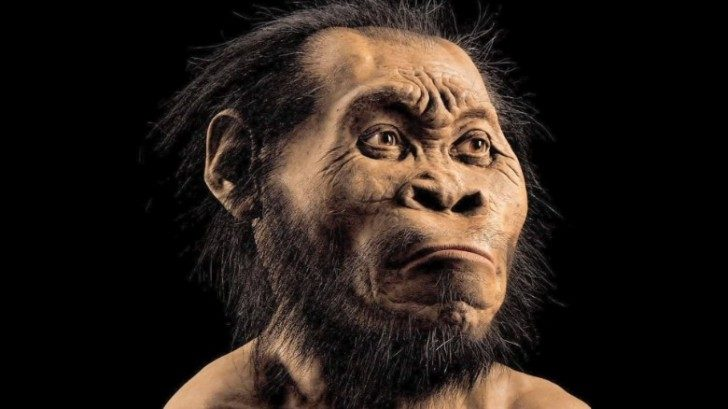150910042646-human-ancestor-species-discovered-south-africa-mckenzie-pkg-00002221-exlarge-169