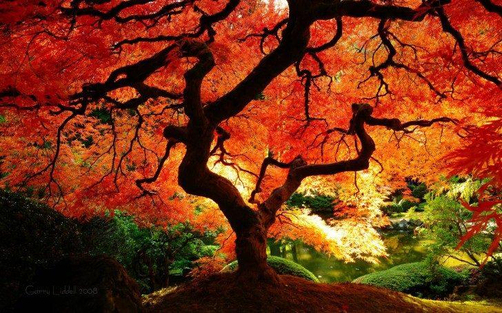 Fall-Tree-HD-Wallpaper