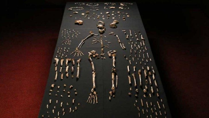 Homo-naledi-remainings