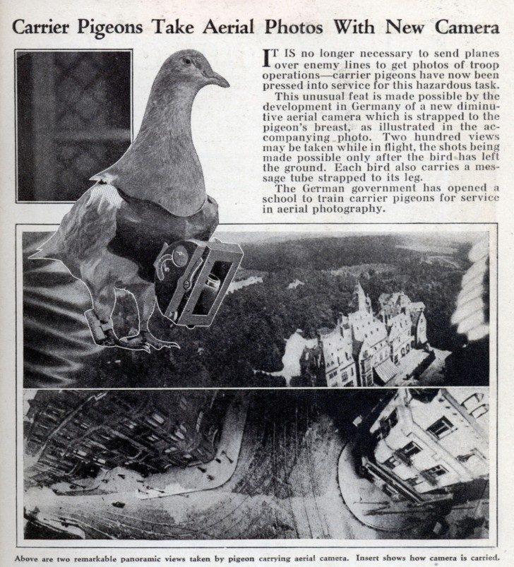 Pigeon-photography-10