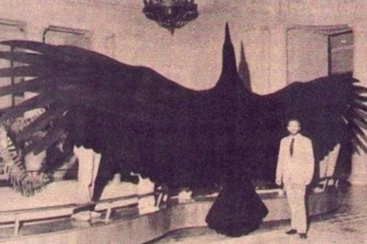 Argentavis magnificens - największy na świecie gatunek ptaka