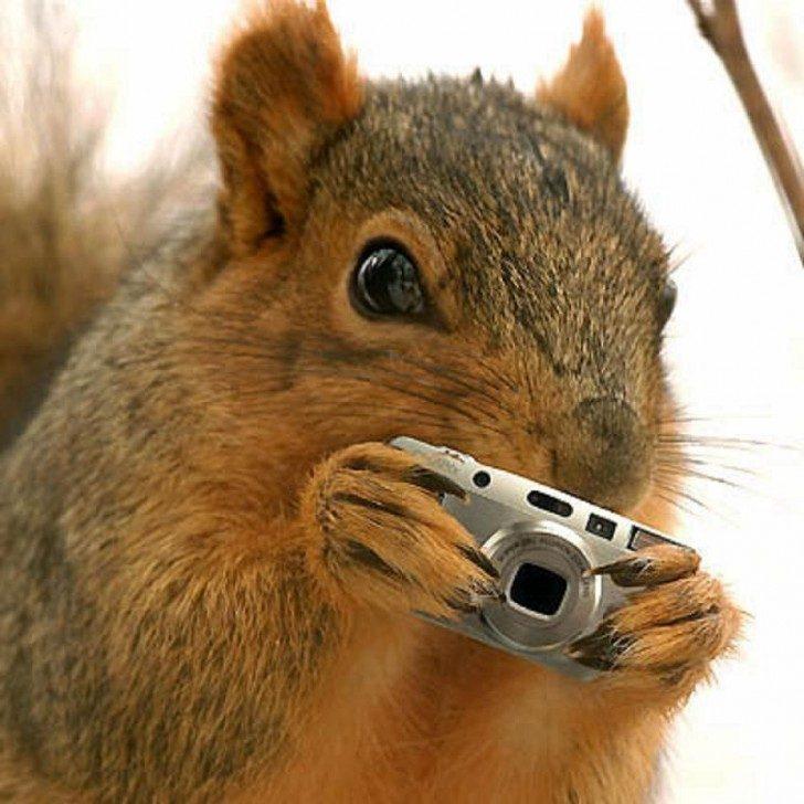 squirrel-spy