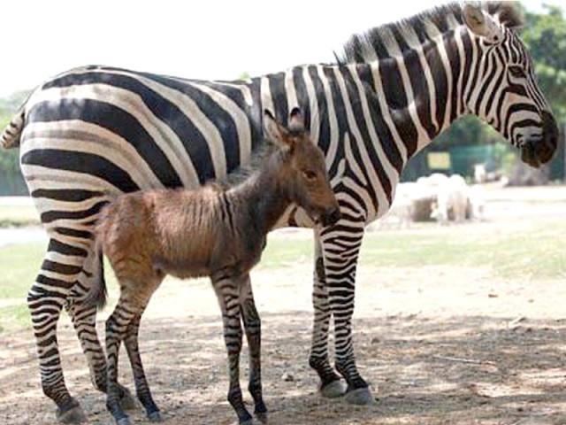 weird-hybrid-animals-that-actually-exist-20303